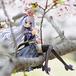 フィギュアのある風景#26 コトブキヤ アルフィン ~アンブリオversion~ from シャイニング・フォース フェザー