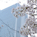 桜とかダンボー写真展とか近況とか